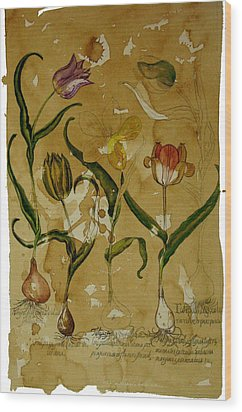Flowers In Herbarium Wood Print by Arual Jay