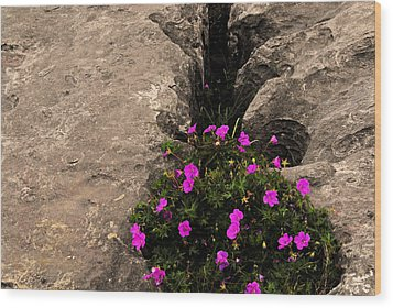 Flowers In Stone Wood Print