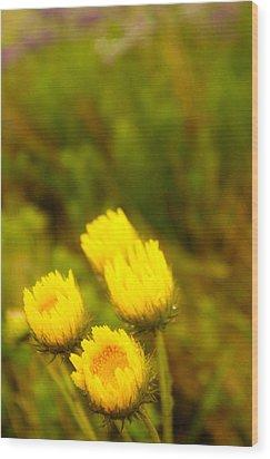 Flowers In The Wild Wood Print by Alistair Lyne