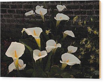 Flowers Of Ireland  Wood Print by Will Burlingham