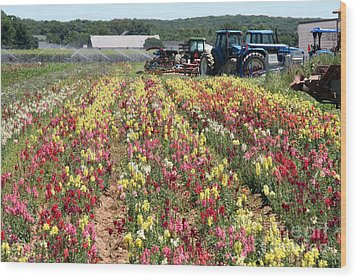Wood Print featuring the photograph Flowers On The Farm-2 by Steven Spak
