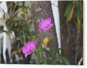 Flowers - Panviman Chiang Mai Spa And Resort - Chiang Mai Thailand - 01131 Wood Print by DC Photographer