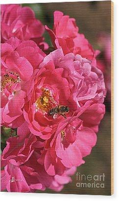 Flowers-roses-pink-bee Wood Print by Joy Watson
