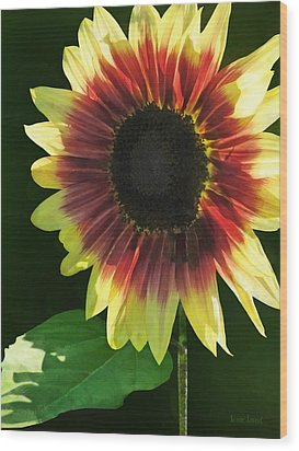 Flowers - Sunflower Ring Of Fire Wood Print by Susan Savad
