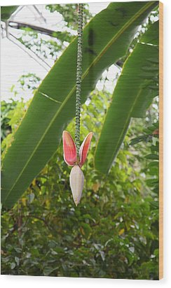 Flowers - Us Botanic Garden - 01136 Wood Print by DC Photographer