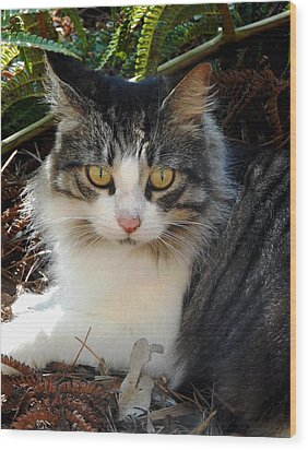 Fluffy Cat Wood Print by Pamela Walton