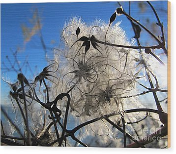 Fluffy Flower Wood Print by Art Photography