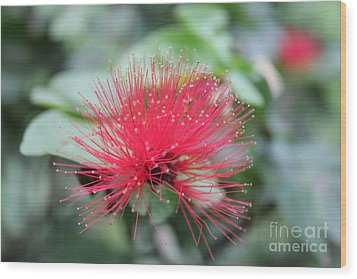 Wood Print featuring the photograph Fluffy Pink Flower by Sergey Lukashin