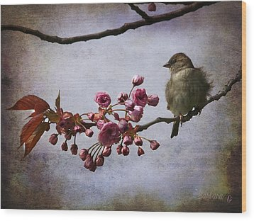 Fluffy Sparrow  Wood Print by Barbara Orenya