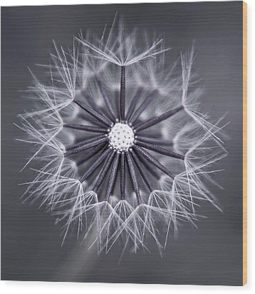 Fluffy Sun - S99b Wood Print by Variance Collections