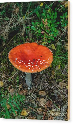 Fly Agaric Fungi Wood Print by Adrian Evans
