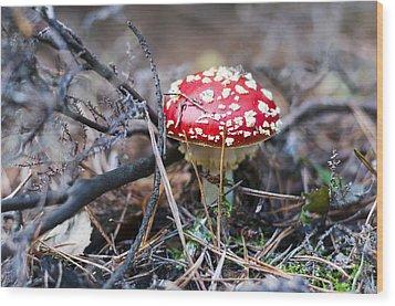 Fly Agaric Toadstool Wood Print by David Isaacson