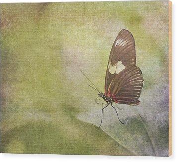 Fly Away Wood Print by David and Carol Kelly