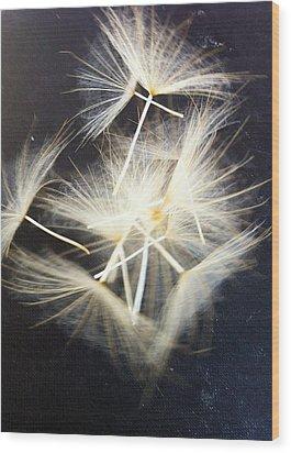 Fly Away Wood Print by Stephanie Aarons