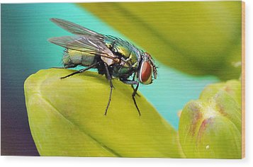 Wood Print featuring the photograph Fly By by Cathy Donohoue