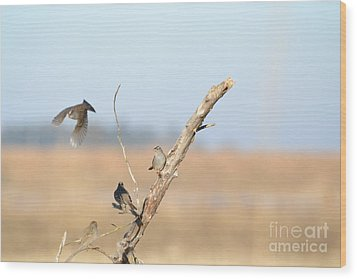 Fly Bye Wood Print by Laurianna Taylor
