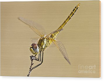 Fly Dragon Fly Wood Print by Heiko Koehrer-Wagner
