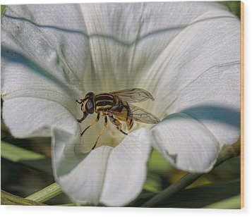Wood Print featuring the photograph Fly In White Flower by Leif Sohlman