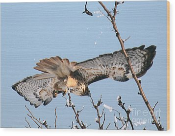 Flyby Wood Print by Bob Hislop