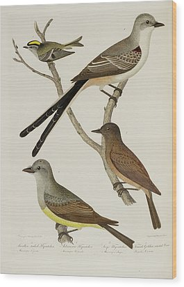 Flycatcher And Wren Wood Print by British Library