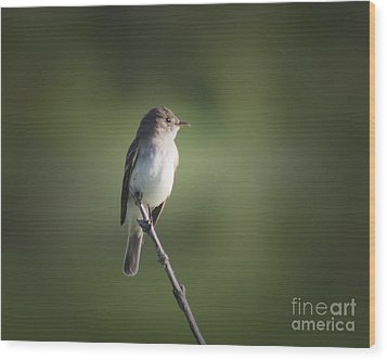 Wood Print featuring the photograph Flycatcher In Meditation by Anita Oakley
