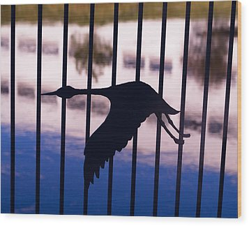 Flying Fence Wood Print