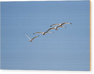 Wood Print featuring the photograph Flying Formation by John M Bailey