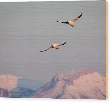 Wood Print featuring the photograph Flying High by Jack Bell