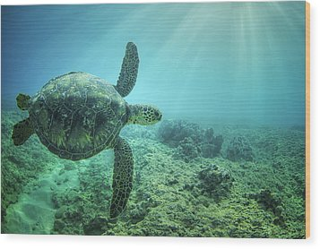Flying Honu Wood Print by Hawaii  Fine Art Photography