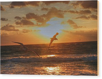 Wood Print featuring the photograph Flying In The Sun by Dennis Baswell