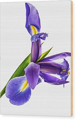 Flying Purple People Pleaser Wood Print by Steve Harrington