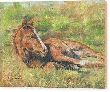Foal Wood Print by David Stribbling