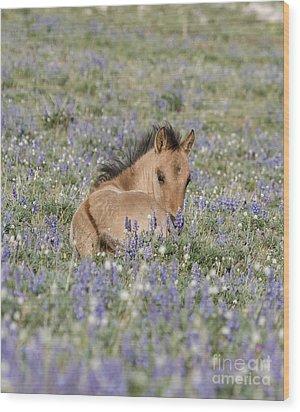 Foal In The Lupine Wood Print by Carol Walker
