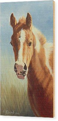 Foal Portrait Wood Print by Paul Krapf