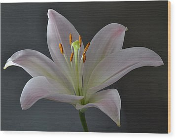 Focus On Lily. Wood Print by Terence Davis