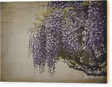 Focus On Wisteria Wood Print by Terry Rowe