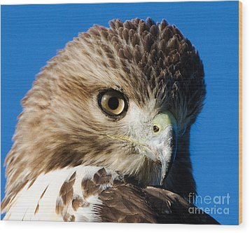 Wood Print featuring the photograph Hawk Eye by Stephen Flint