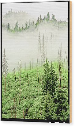 Wood Print featuring the photograph Fog And Trees by Craig Perry-Ollila