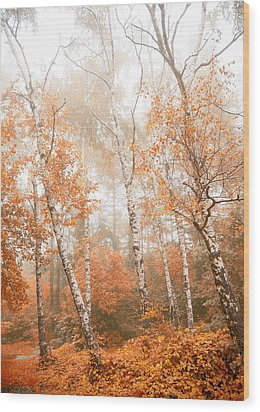 Foggy Autumn Aspens Wood Print