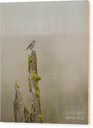Foggy Friend Wood Print by Birches Photography