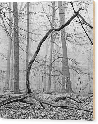 Foggy Morning Deciduous Forest Wood Print by A Gurmankin