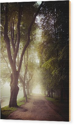 Foggy Morning In The Nesvizh Park Wood Print by Sviatlana Kandybovich