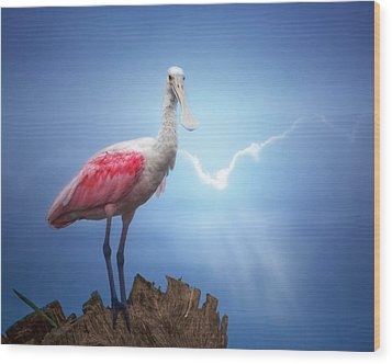 Foggy Morning Spoonbill Wood Print by Mark Andrew Thomas