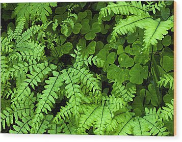 Foliage At Springtime Wood Print by Andrew Soundarajan