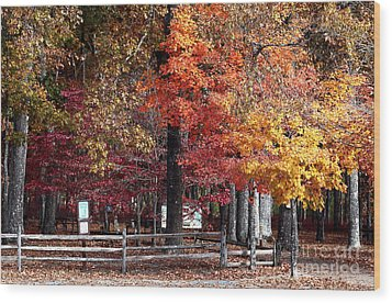 Foliage Colors Wood Print by John Rizzuto