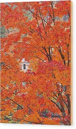 Foliage Window Wood Print by Alan L Graham
