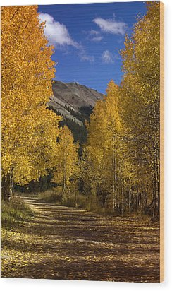Wood Print featuring the photograph Follow The Gold by Ellen Heaverlo