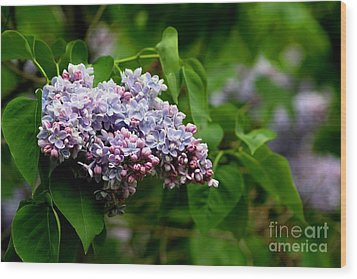 For The Love Of Lilac Wood Print by Living Color Photography Lorraine Lynch