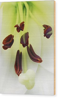 For The Love Of Lilies 1 Wood Print by Wendy Wilton