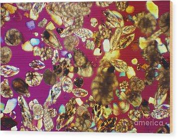 Foraminifera Lm Wood Print by Charles Gellis